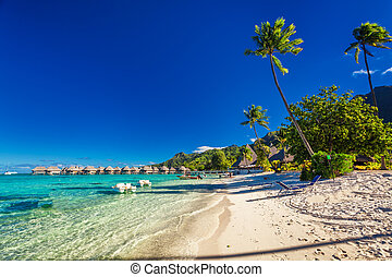Tropical resort with sandy beach and palm trees on Moorea,...