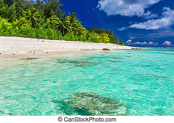 Tropical beach with palm trees on west side of Rarotonga,...