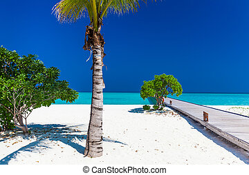 Palm tree in tropical perfect beach with jetty