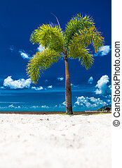 A lone coconut tree on a tropical beach with a blue sky, Cairns Esplanade