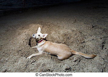 Two Dogs Digging in Beach Sand