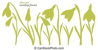 Set silhouette beautiful snowdrop flowers. Vector...