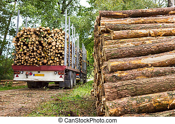 Truck and trailer loaded with pine tree trunks - Dutch truck...