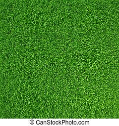 Green grass. natural background texture. high resolution. 3d...