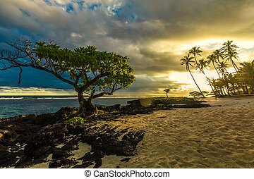 Single tree and coconut palm trees in the sunset on Samoa Islands