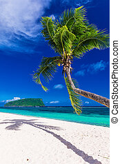 Tropical vibrant natural beach on Samoa Island with palm tree