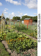 allotment - an allotment filled with flowers and vegetables