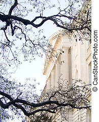 Stately Marble Columned Supreme Court Building in Washington DC framed by Branches