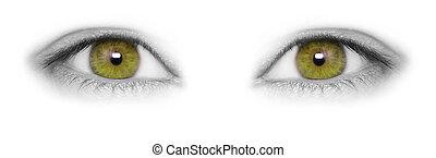 Beautiful hazel eyes isolated on white background