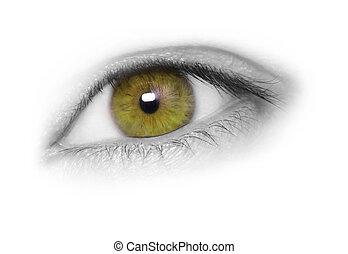 Beautiful hazel eye isolated on white background