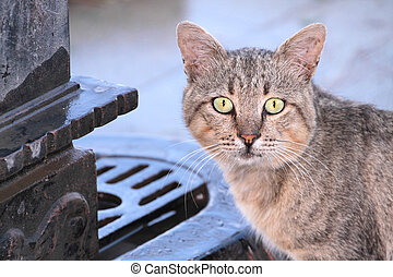 Stray cat in close up image