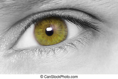 Beautiful hazel eye. macro shot.