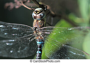 Dragonfly close up image
