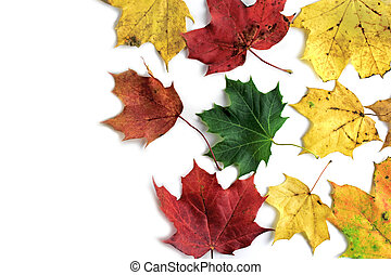 Colorful leaves on white background close up image