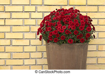 Flower pot front of yellow brick wall close up image