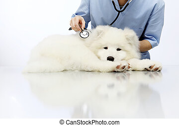 Veterinarian examining dog on table in vet clinic