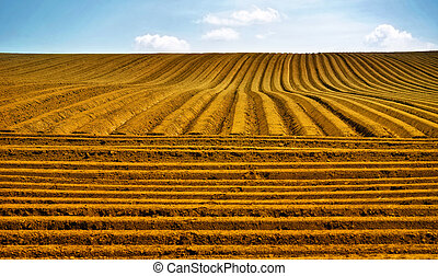 Farm field with furrows