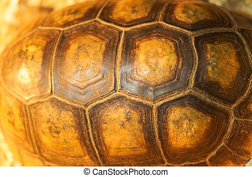 Tortoise shell background - large turtle shell texture...