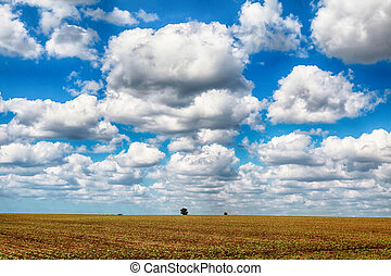 agricultural landscape with field and blue sky at spring season