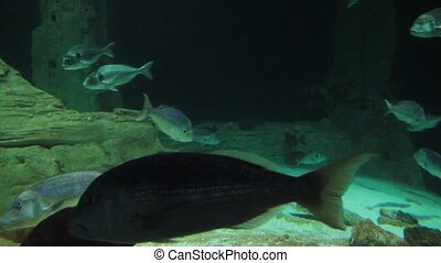 Under sea and tropical big fishes in deep and dark sea close...