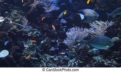 Colorful fishes swimming underwater