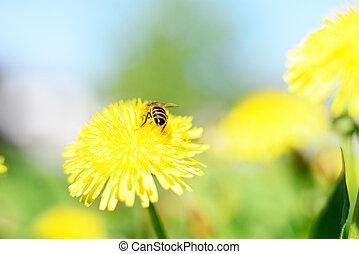 Honeybee and yellow flowers. - Honeybee and yellow flowers...