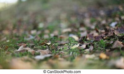 Autumn leafs dropping on ground