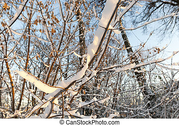 trees in the forest in winter