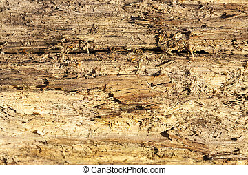 old split wood - old split with an ax tree with irregular...