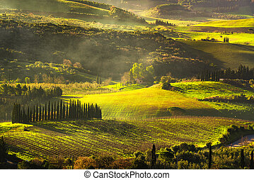 Maremma countryside, sunrise foggy landscape, vineyards and...