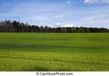 Agriculture. cereals. Spring - Agricultural field on which...