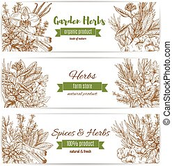 Spice and garden herbs sketch banner set. Natural fresh...