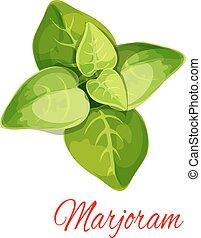 Marjoram or oregano spice herb cartoon icon - Marjoram spice...