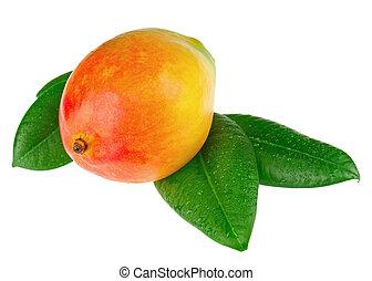 Fresh mango fruit with green leaves isolated on white background.