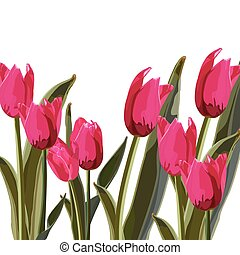 Tulip Vector Illustration on a white background