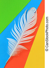 White feather on colorful background