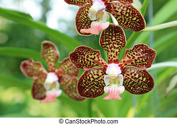 Close-up of Orchid