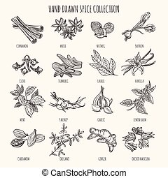 Herbs, seasonings and seeds ingredients - Vector hand drawn...