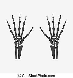 wrist hands bones - human wrist hands bones - vector