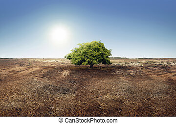Tree on dry land effect of changing environment