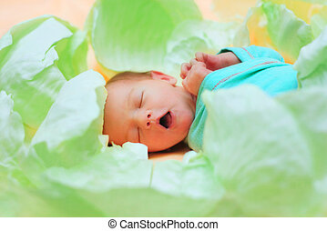 newborn in the cabbage - beautiful newborn baby in the green...
