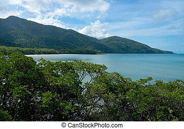 Daintree Rainforest at Cape Tribulation - daintree national...