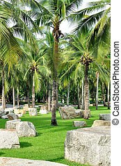 Coconut and palm trees with big white rock in beautiful park...