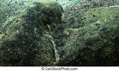 Stones underwater closeup in Lake Baikal Siberia Russia....