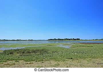 Salt marsh with Salicornia, Atlantic Ocean, France - Salt...