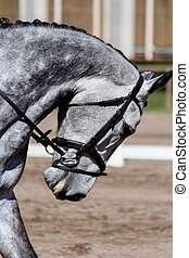Portrait of beautiful gray horse during show - Portrait of...