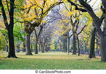 Canopy of American elms in Central Park - The Mall and...