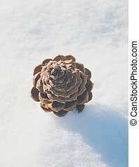 pine cone in the snow - single pine cone from above in the...