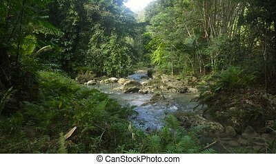 River in the rainforest - River flows through the rainforest...