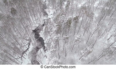 Aerial frozen pine and fir trees in the snow in winter. Many...